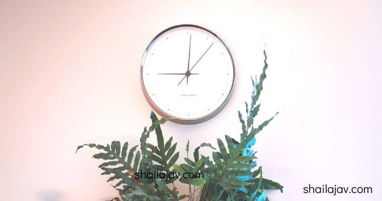 Clock against a wall above set of ferns